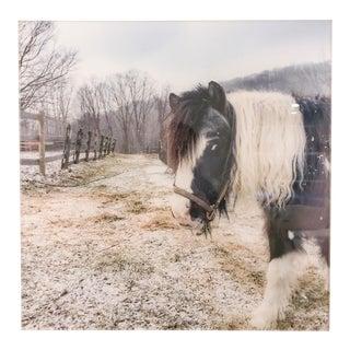 Acrylic Mounted Black & White Horse Photograph