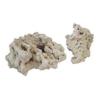 Abstract Natural Coral - A Pair