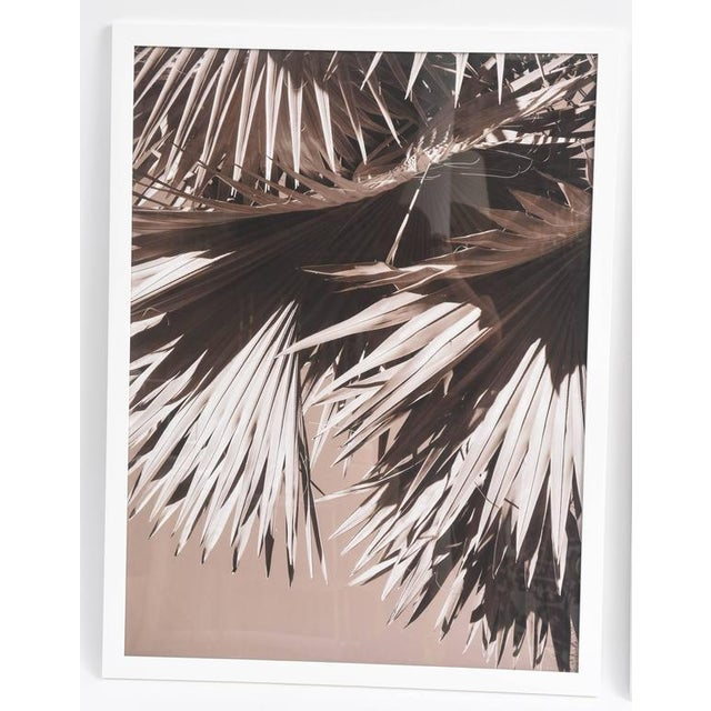 "Image of ""Palm Helix"" Diptych by Christine Ralphs"