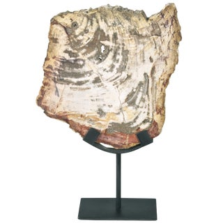 Polished Petrified Wood Slice On Stand