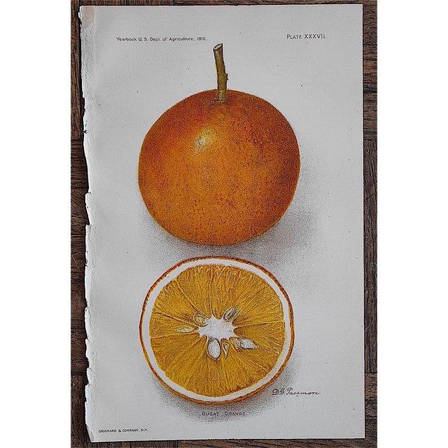Antique Dugat Orange Lithograph - Image 2 of 3