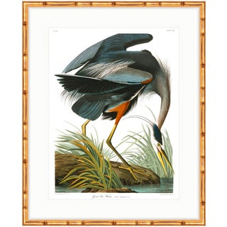 "Gold Bamboo Framed ""Birds of America"" Great Blue Heron Audubon Print"