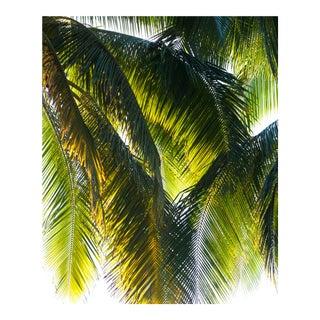 """Parasol"" Framed Puna Peninsula, Hawai'i Photograph, 2017"