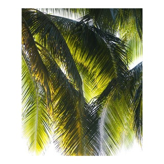 """""""Parasol"""" Puna Peninsula, Hawai'i 2017"""