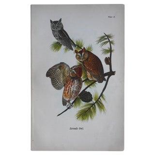 Antique Owl Chromolithograph