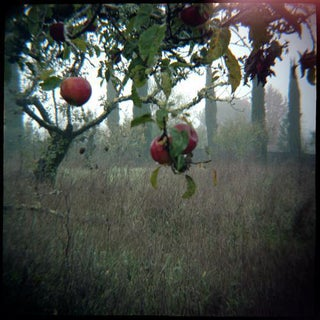 Orchard Flare Photograph