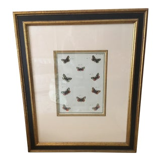 Antique Butterfly Botanical Print