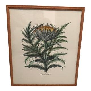 """Authentic Botanical Intaglio """"Cinera Cum Flore"""" Print"""