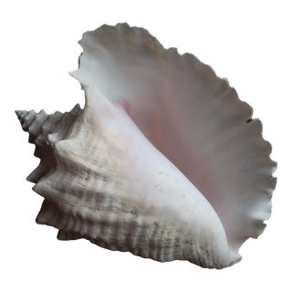 Giant Conch Seashell Decor