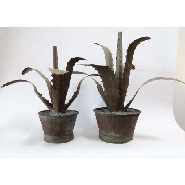 Image of Zinc Potted Succulents - A Pair