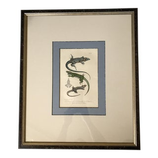 Custom Framed 1832 French Lizard Print