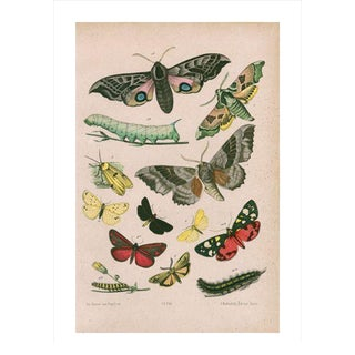 Antique Moths & Caterpillars Archival Print