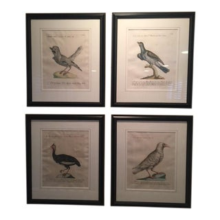 18th Century Saverio Manetti Hand Colored Bird Folio Engravings- Set of 4