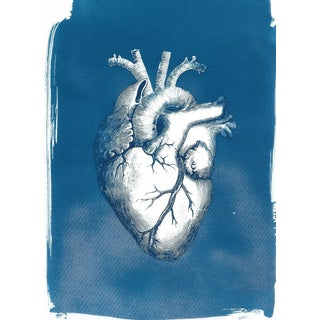Heart Anatomy Vintage Illustration Cyanotype