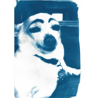 Limited Edition Cyanotype Print- Dog With Eyebrows Meme