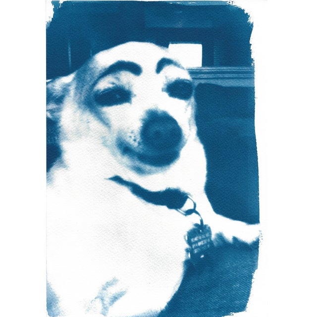 Limited Edition Cyanotype Print- Dog With Eyebrows Meme - Image 1 of 4