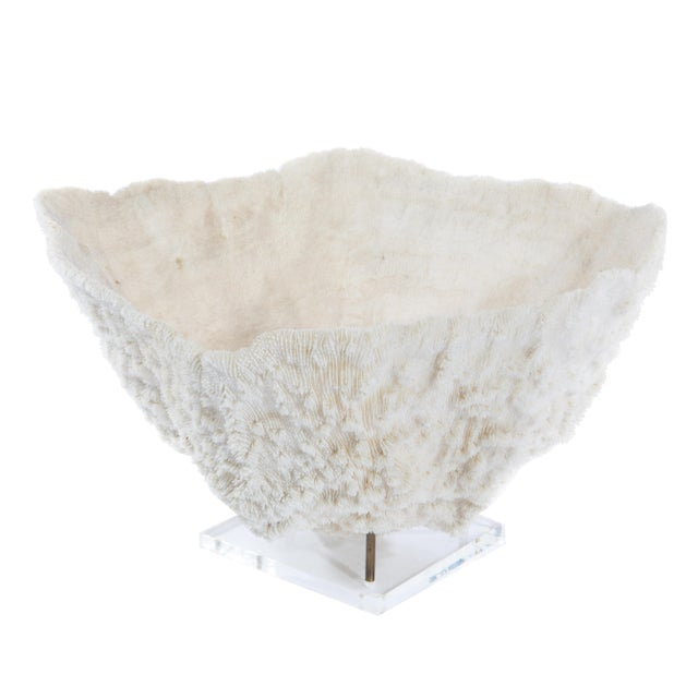 LARGE BOWL-SHAPED CORAL SPECIMEN ON STAND - Image 7 of 11