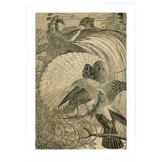 Antique 'Birds of Paradise' Archival Print