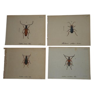 3 18th C. Copperplate Engravings of Insects