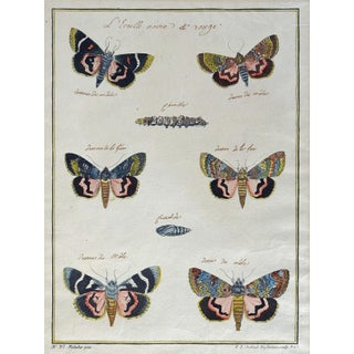 18th Century Hand-Colored Antique Moth Etching
