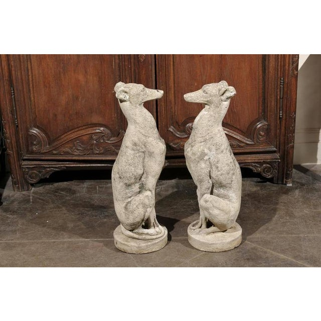 Pair of Vintage Carved Cement Greyhound Sculptures Sitting on Circular Bases - Image 8 of 9