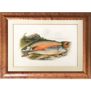 "Antique Sport Fish Lithograph ""Alpine Char"" 1879"