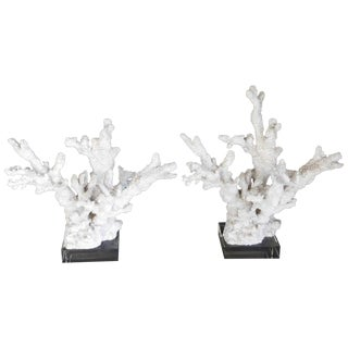 Natural Coral on Lucite Sculptures - A Pair