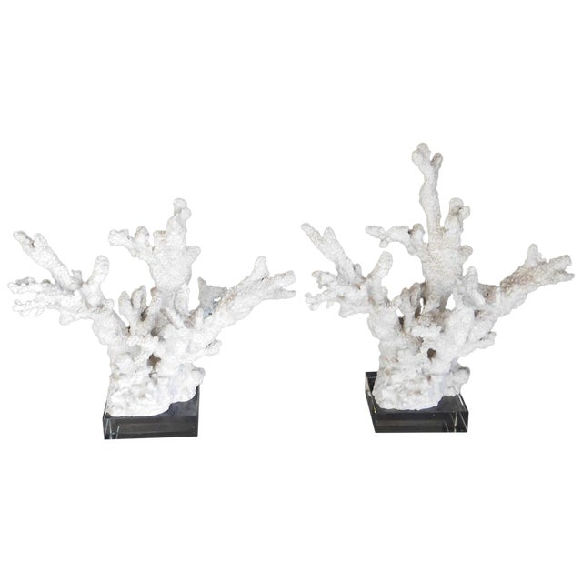 Image of Natural Coral on Lucite Sculptures - A Pair
