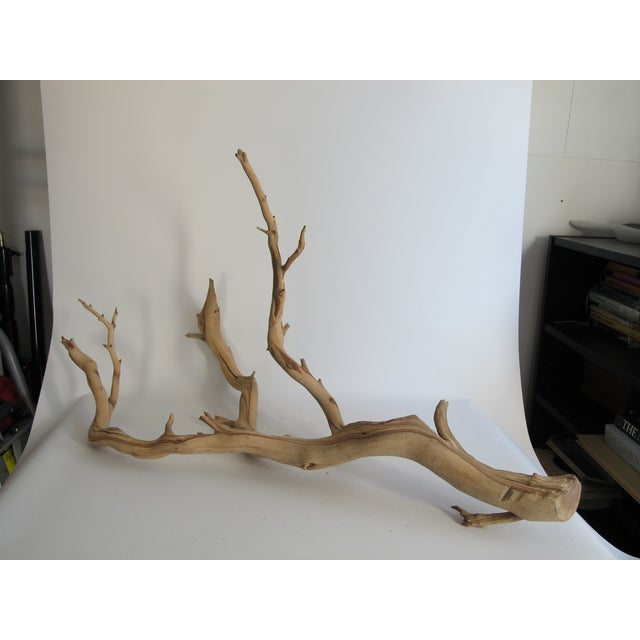 Preserved Driftwood Branch - Image 4 of 5