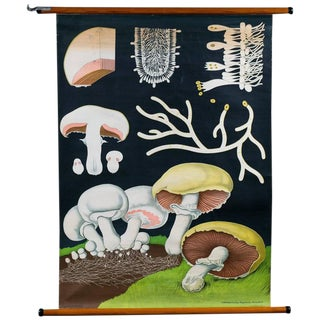 German Teaching Chart of Mushrooms by Jung-Koch-Quentell