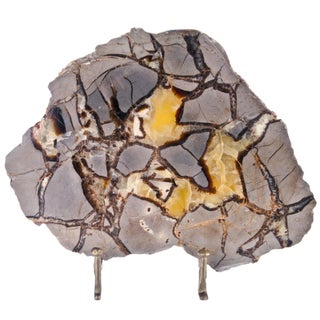 Polished Septarian Stone Slice on Stand