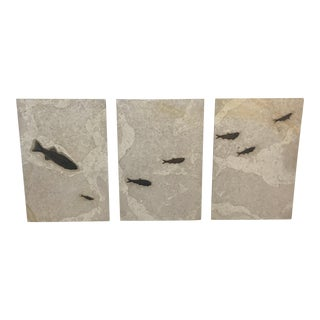Green River Stone Company Fish Fossil Wall Triptych - Set of 3