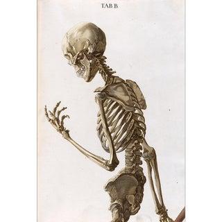 Skeleton Bones Print of Illustration