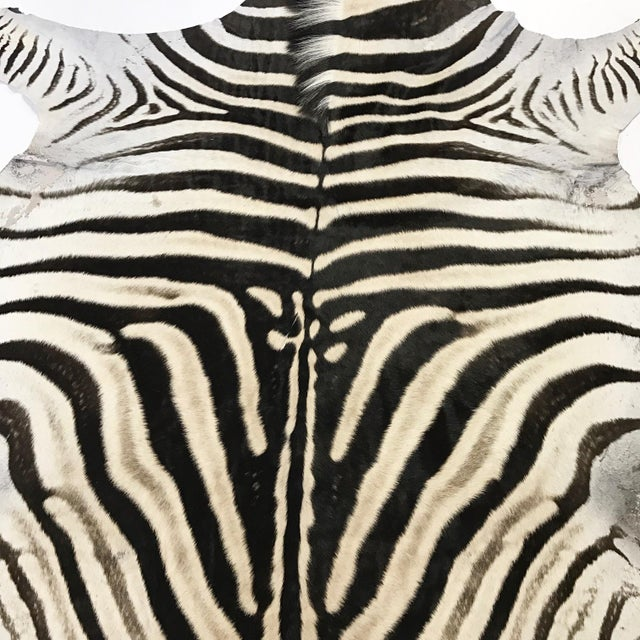 "Natural Zebra Hide Rug - 6' x 7'9"" - Image 3 of 4"