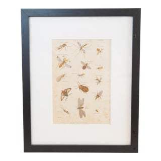 1868 Hand Colored Insect Print