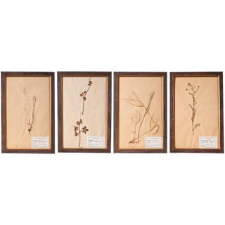 Framed Pressed Botanicals - Set of 3