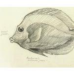 Image of Original Hawaiian Fish Drawing, 1970