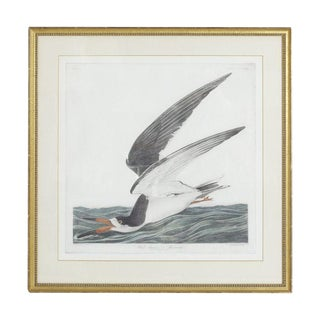 Gold Framed Audubon Print