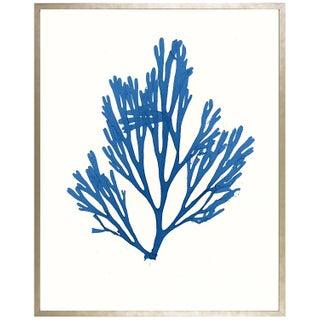 """Azure Seaweed #1"" Framed Print"