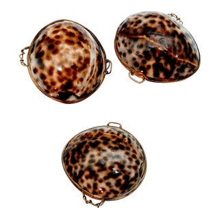 Tiger Cowrie Shell Coin Purses - Set of Three