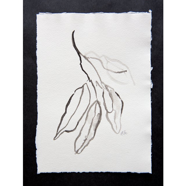 Image of Bay Leaves in Ink Drawing
