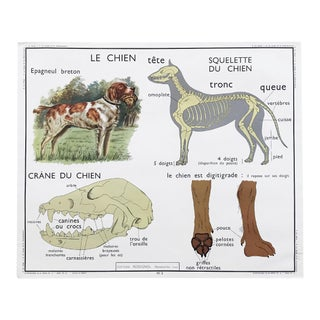 "Vintage French Educational Double-Sided ""Le Chien / Dog / Les Insectivores"" School Poster Chart"