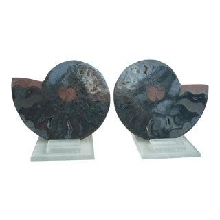 Natural Split Black Ammonite - A Pair