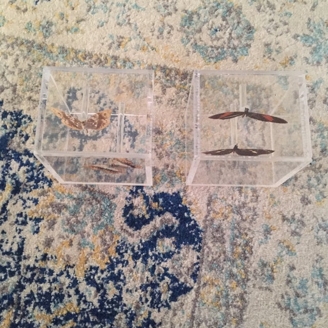 Lucite Cube Box Encased Butterfly Specimens Oddities Curiousities- a Pair - Image 5 of 11