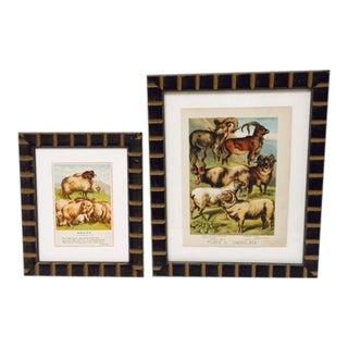 Vintage Sheep Ram Prints in Carved Frames - A Pair