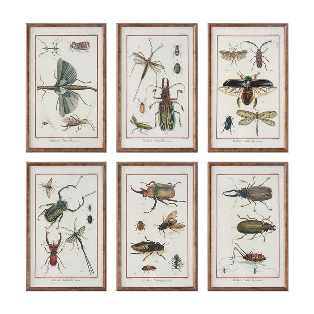 Six Framed Scientific Bugs & Insects Prints - Image 1 of 3