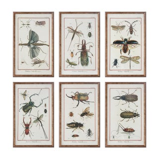 Six Framed Scientific Bugs & Insects Prints