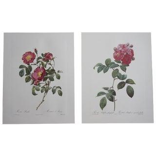 Pink Rose Botanical Prints - A Pair