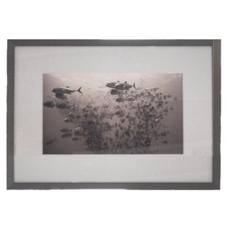 "Framed Black & White ""Curious Jacks"""