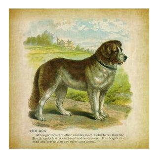 Vintage Dog Archival Print